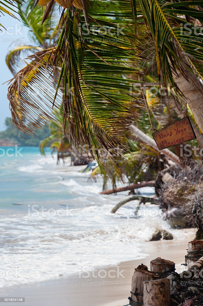Closeup coconut Palm Tree in the wind on white sand stock photo