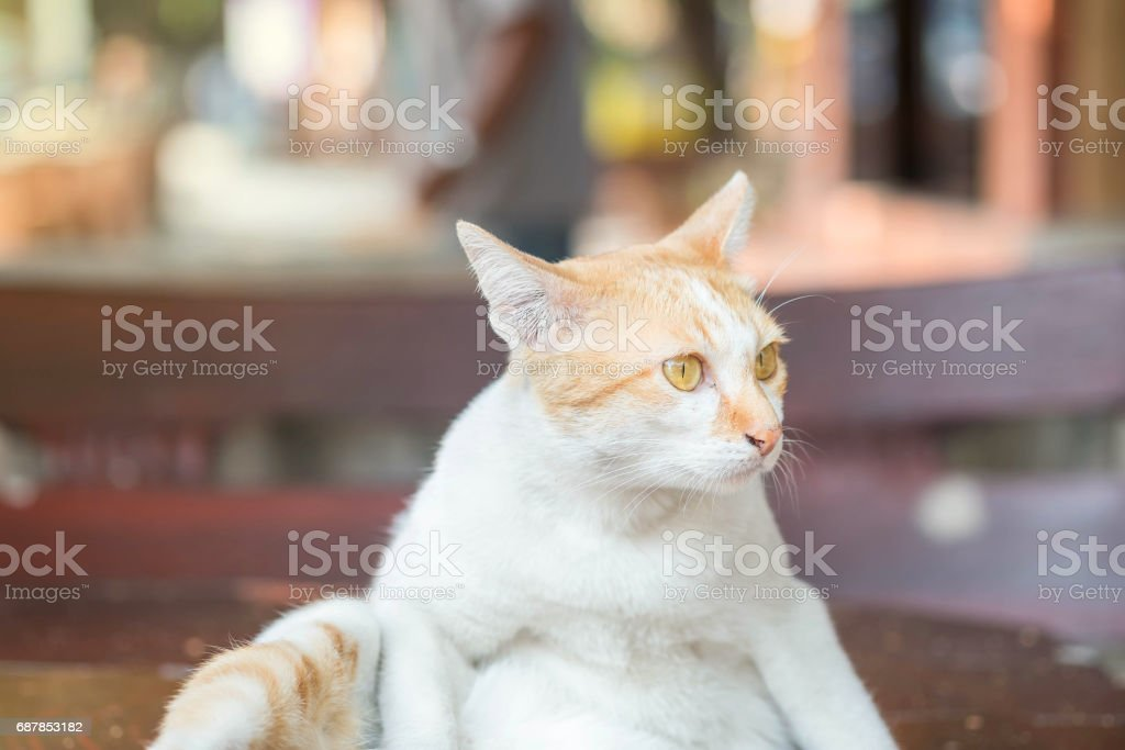 Closeup cute cat sit on table on blurred park view background stock photo