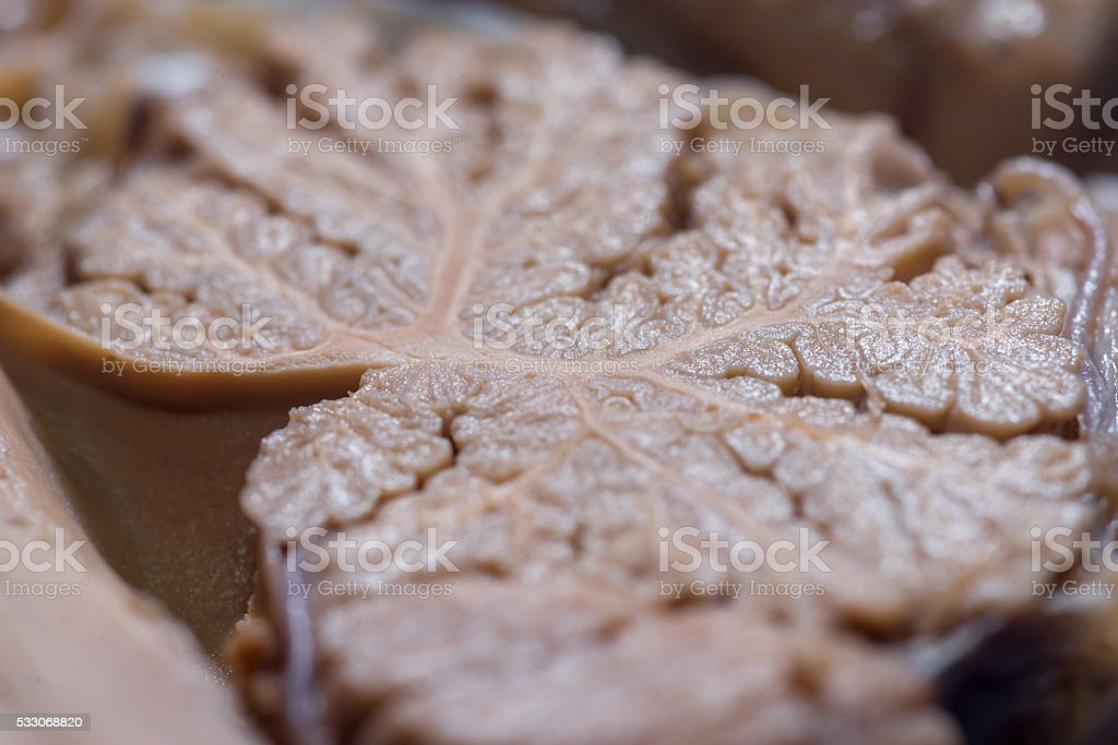 Close-up detail of the surface of the cerebellum stock photo