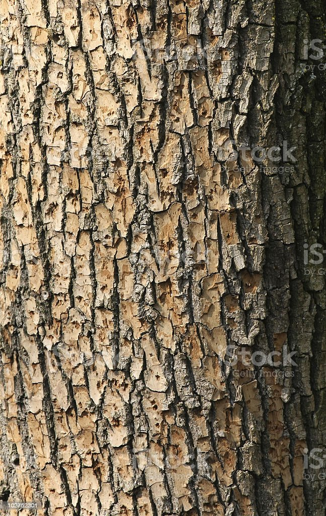 Close-up detailed shot of an old tree bark stock photo