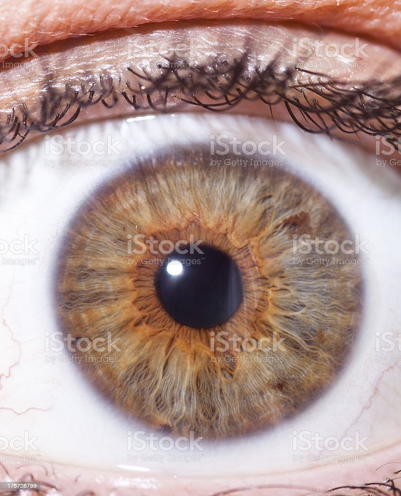 Close-up detailed view of a brown eye stock photo