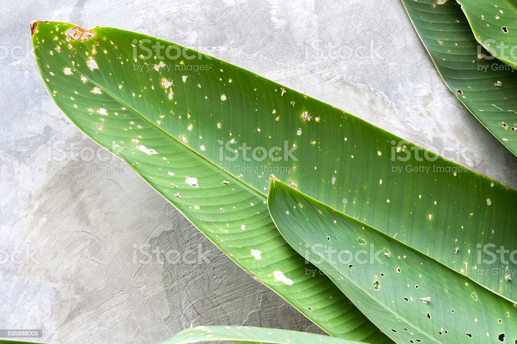 Close-up dirty green leaves royalty-free stock photo