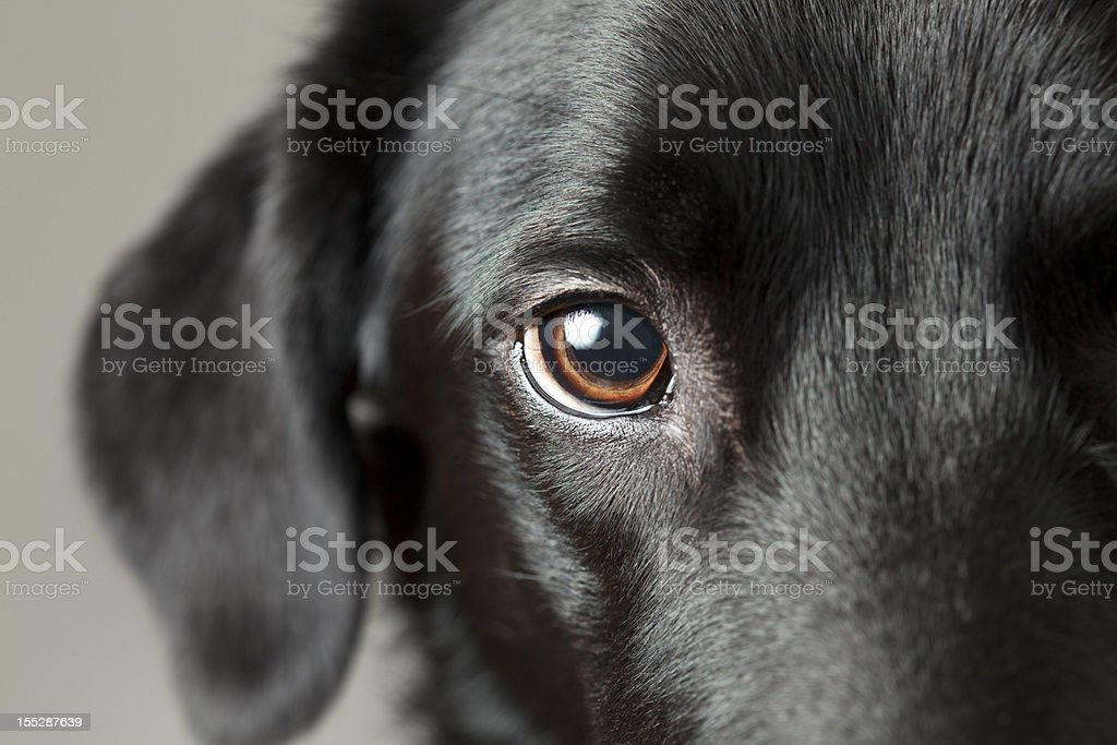 Close-up dog eye looking at you royalty-free stock photo