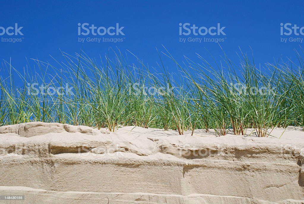 Close-up Dune Grass royalty-free stock photo