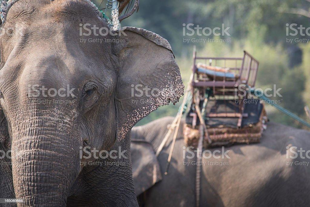Close-up elephant royalty-free stock photo