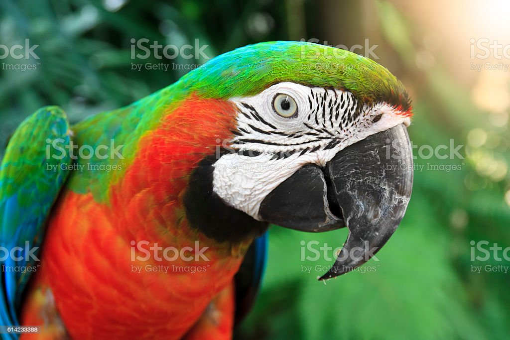close-up eye and head of parrot at the jungle stock photo