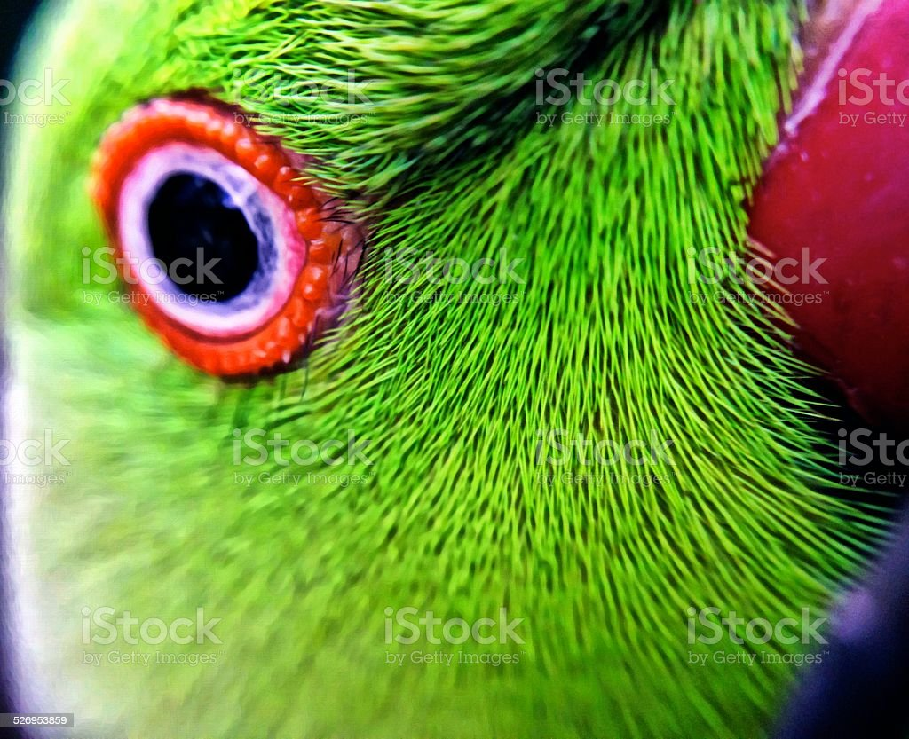 Close-up eye and part of the beak of a parrot. stock photo