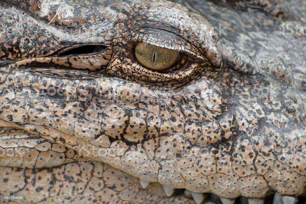 close-up eye of a crocodile. stock photo