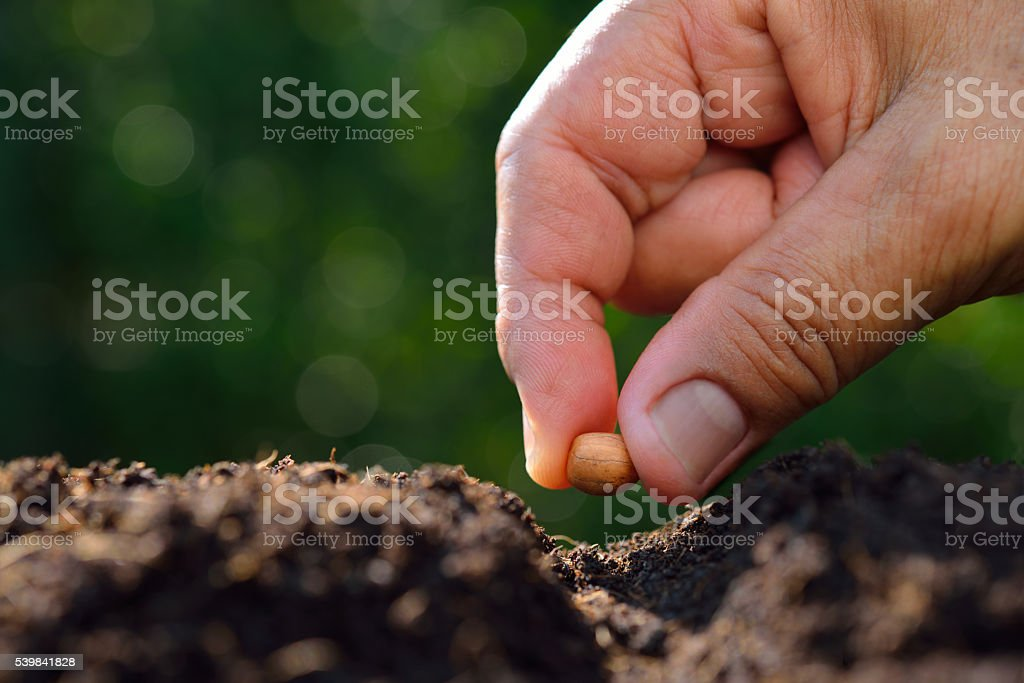 Close-up farmer's hand planting a seed in soil stock photo