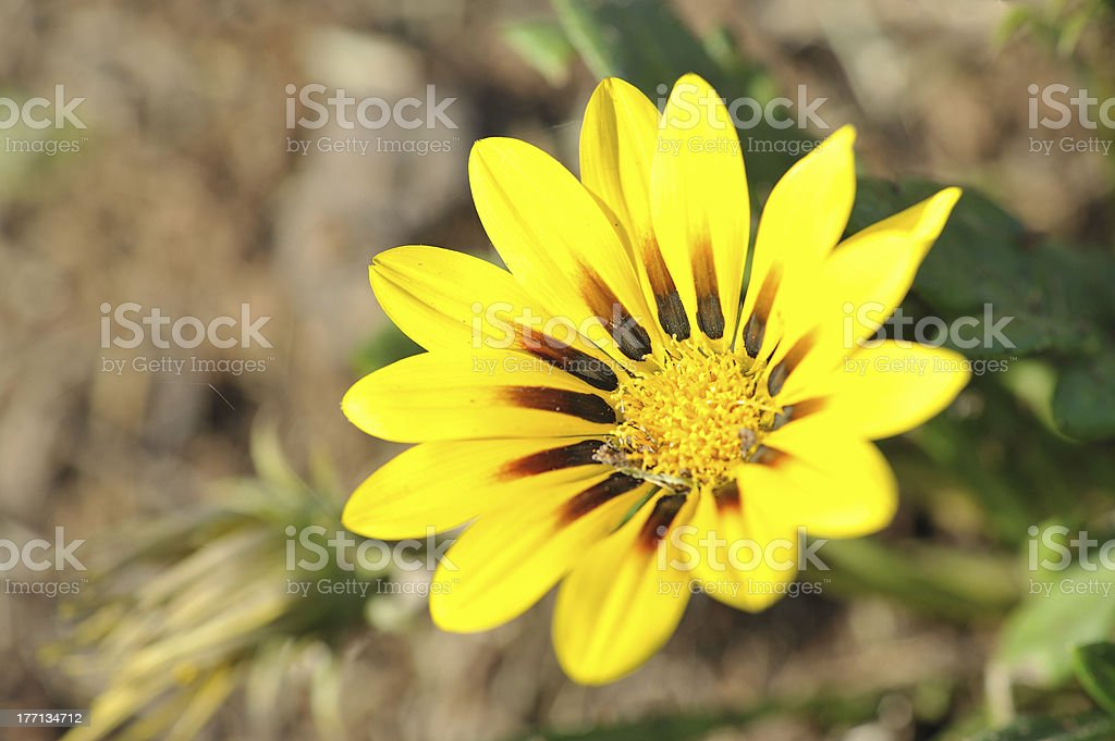 Close-up  flower royalty-free stock photo