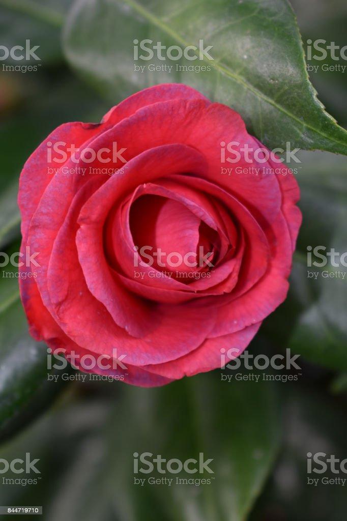 Close-up Flower stock photo