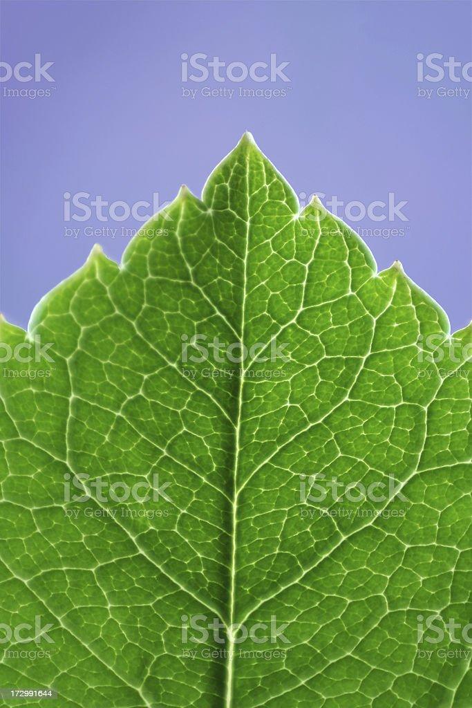 Close-up foliage royalty-free stock photo