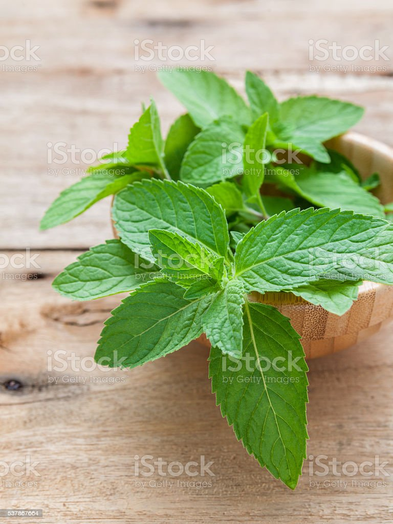 Closeup fresh peppermint  leaves in the wooden bowl . stock photo