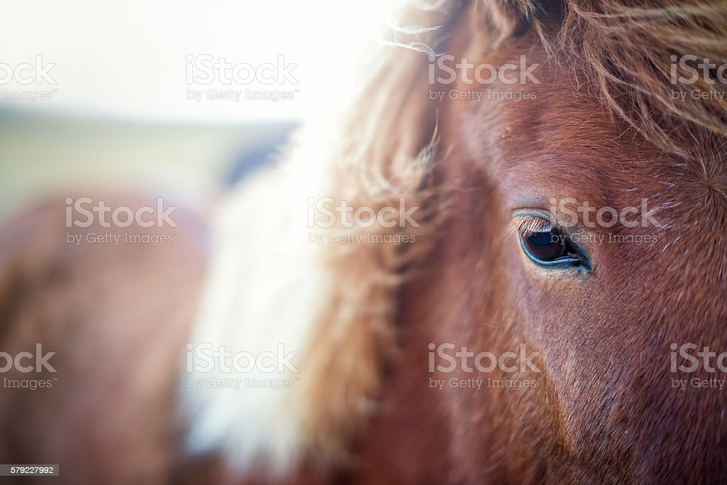 Close-up from a Horse stock photo