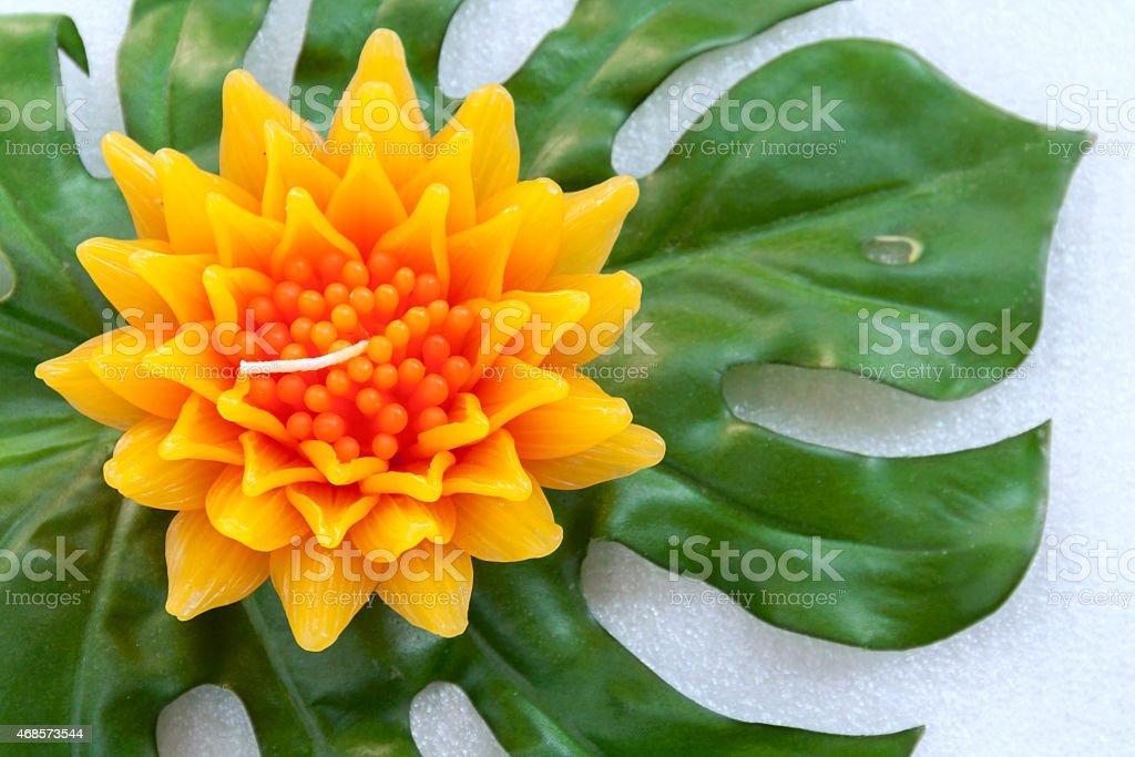 Closeup Gazania flower royalty-free stock photo