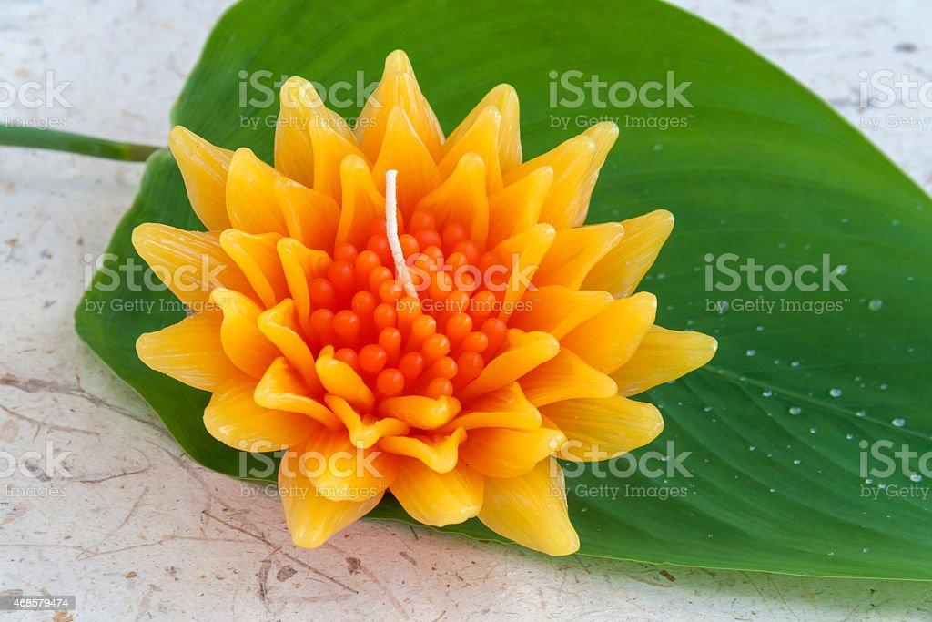 Closeup Gazania flower with green background royalty-free stock photo