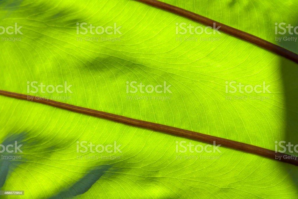 Closeup green leaf texture royalty-free stock photo