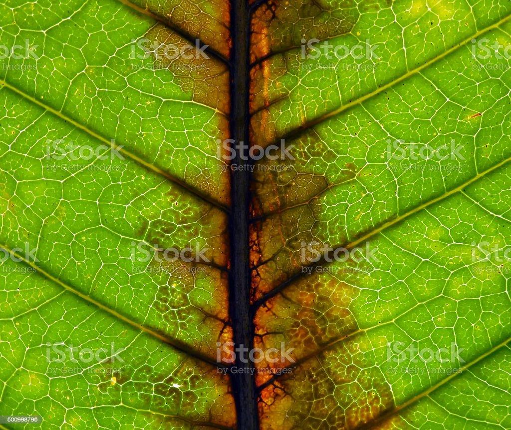 closeup green leaf texture stock photo