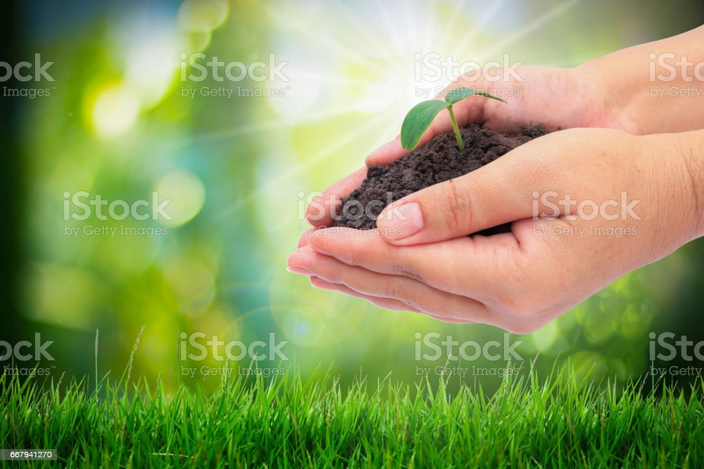 Closeup hand holding baby plant over nature background stock photo