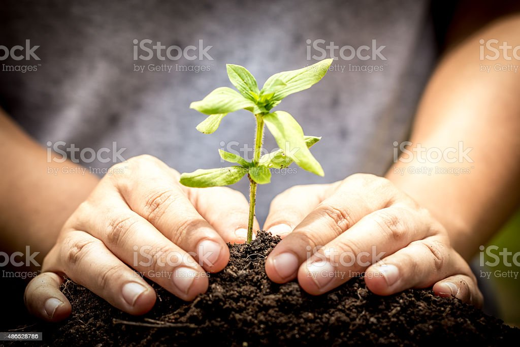 Closeup hand planting young tree in soil on green background stock photo