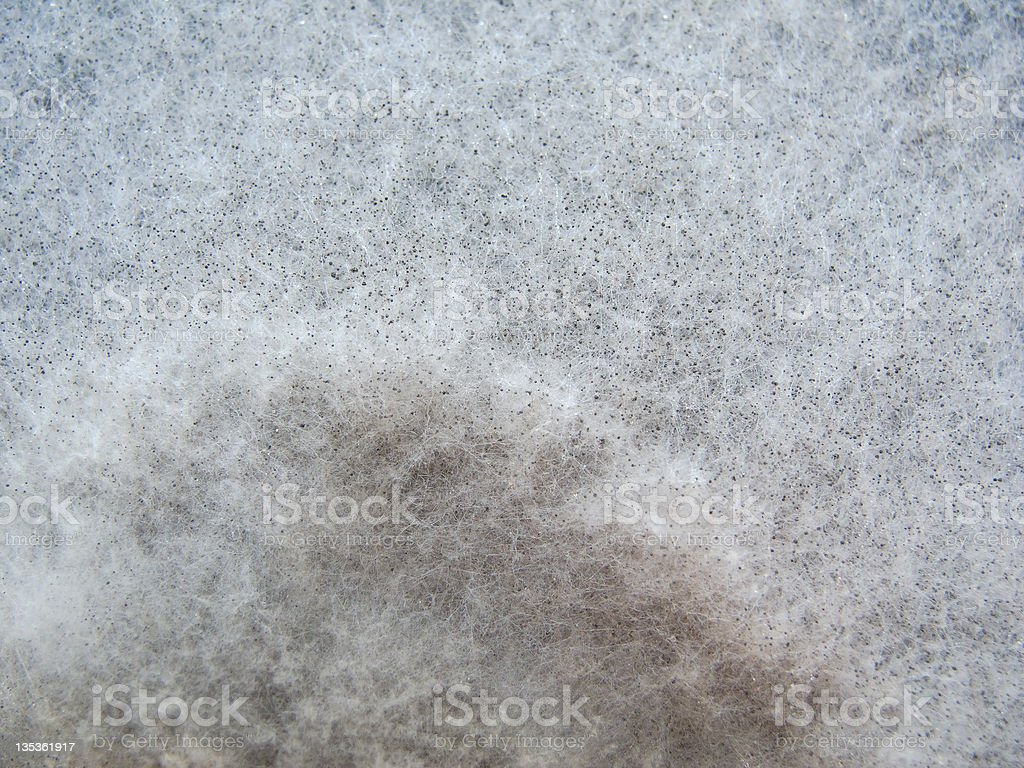 Close-up image of a mold stock photo