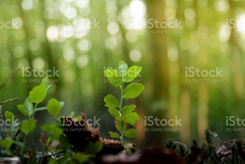 Close-up image of a seedling tree stock photo