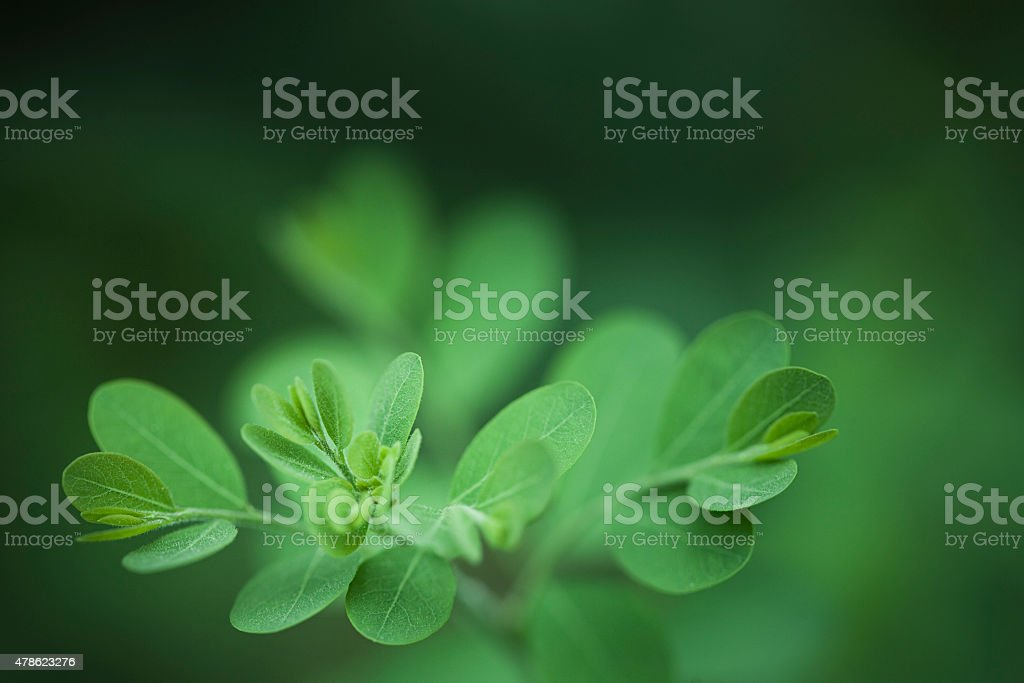 Close-up image of beautiful green new leafs in natural background. stock photo