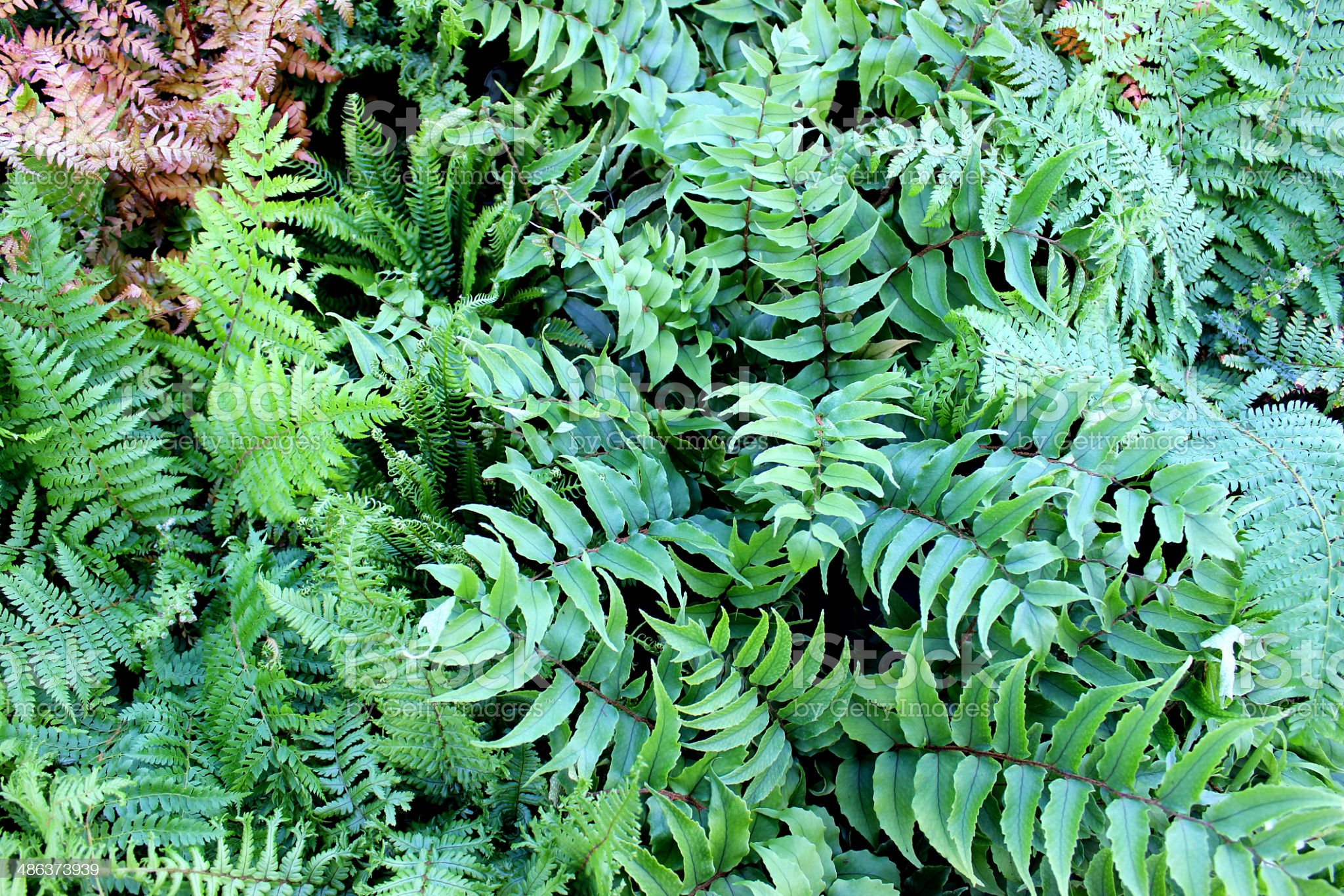 Close-up image of fern leaves royalty-free stock photo