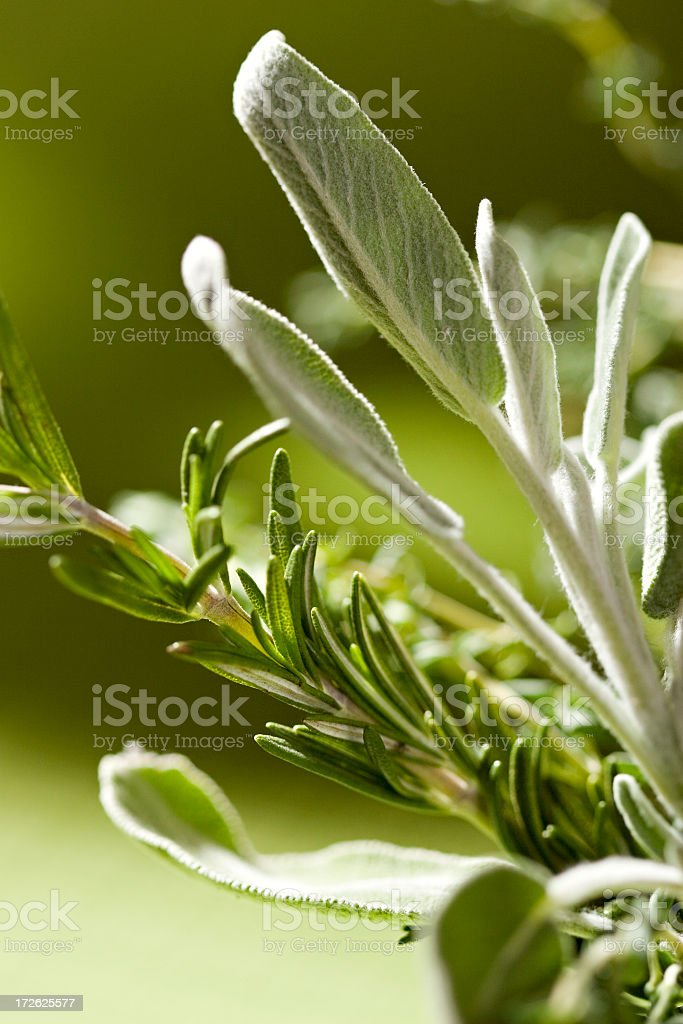 Close-up image of herbs on vine royalty-free stock photo