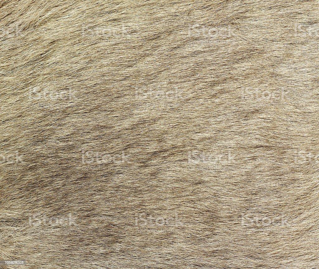 Closeup image of kangaroo fur royalty-free stock photo