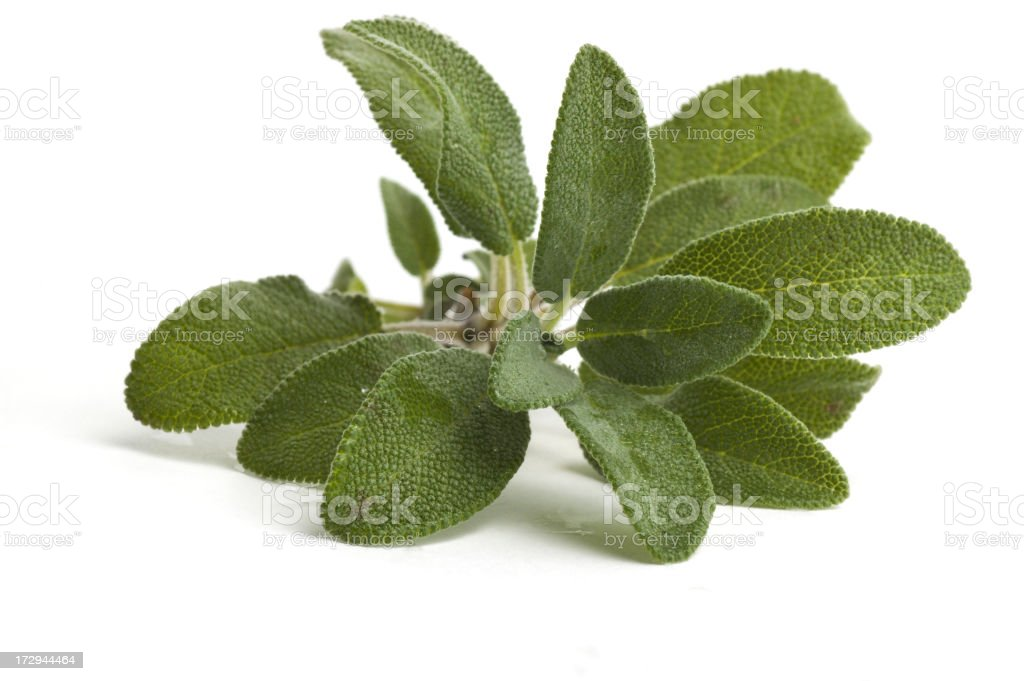 Closeup image of sage leaves on a white background stock photo