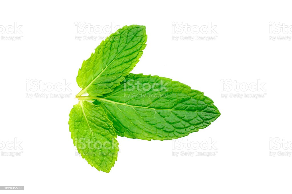 Close-up isolation of a mint leaf on a white background stock photo