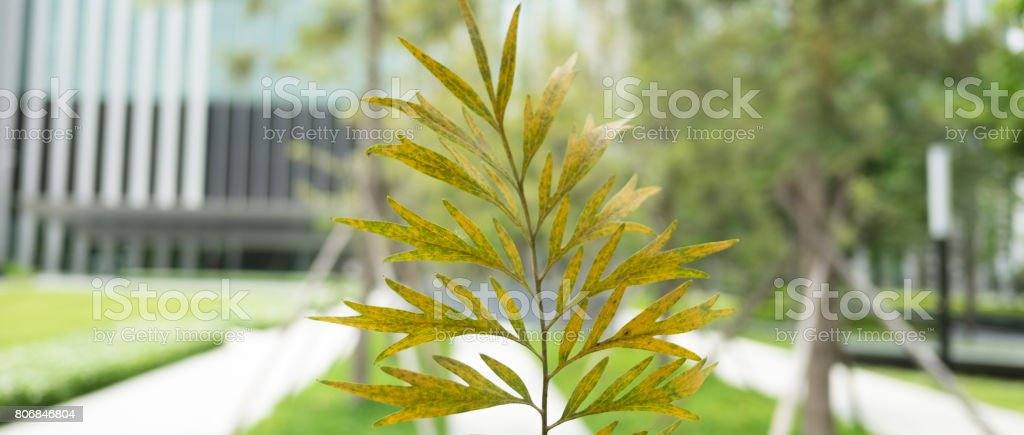 Closeup leave on blurred building background stock photo