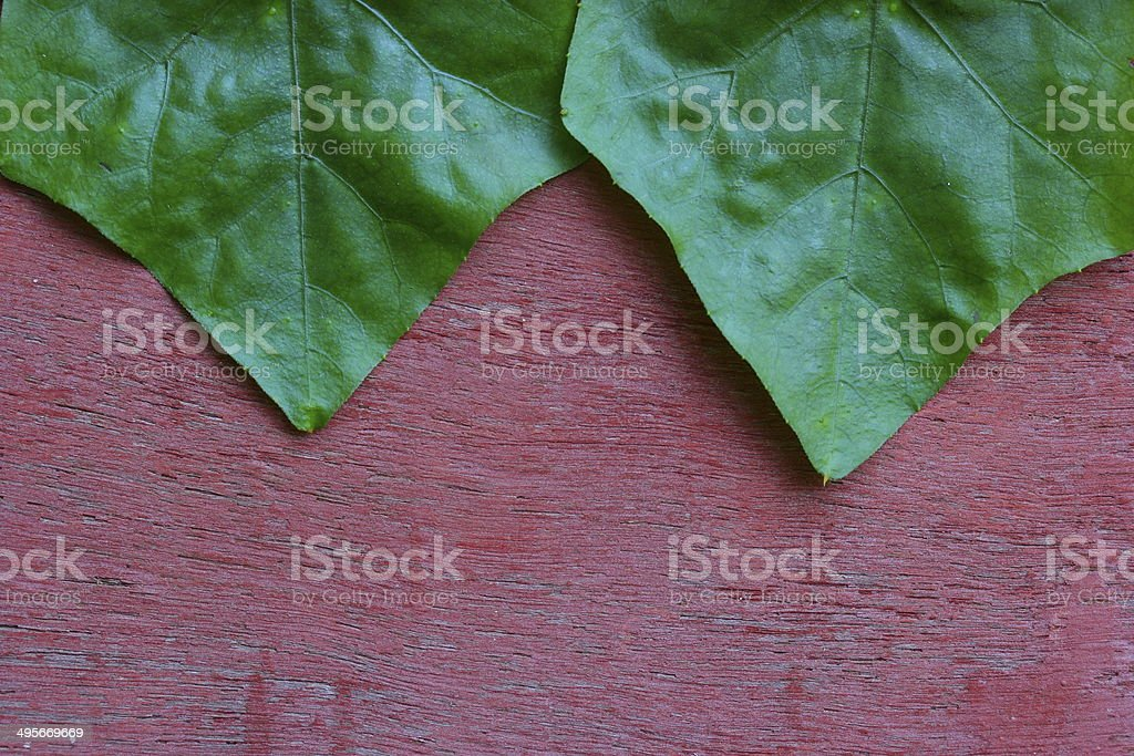 Closeup Leaves with wooden wall stock photo