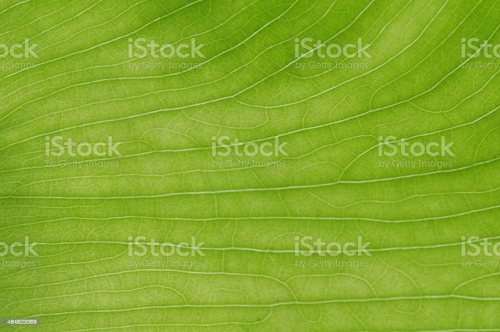 closeup line leaves texture background stock photo
