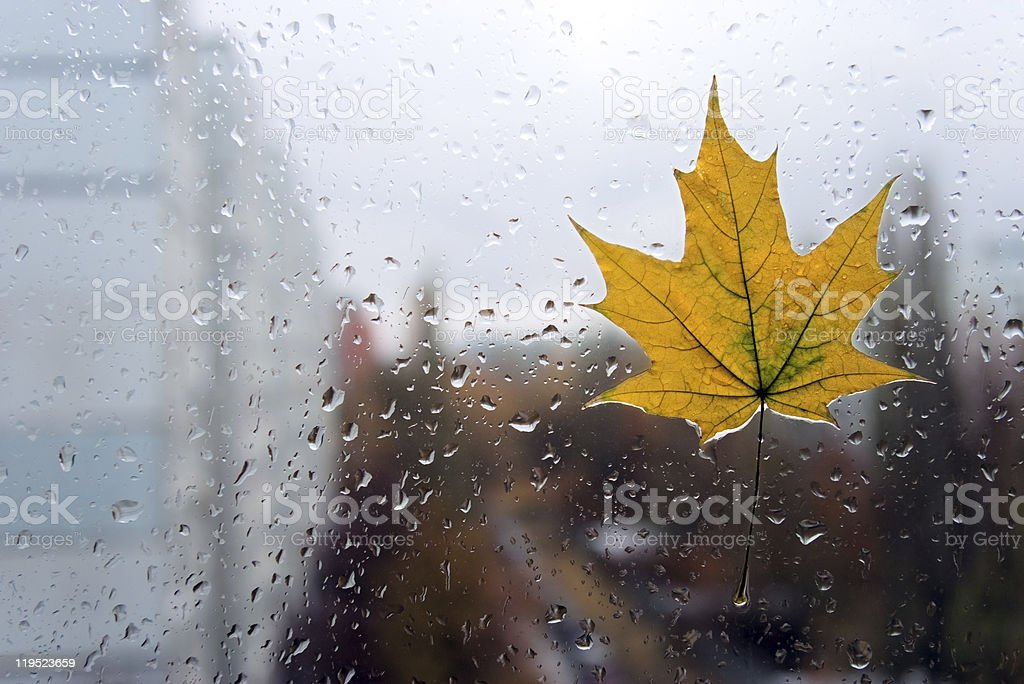 Closeup maple leaf on a glass stock photo
