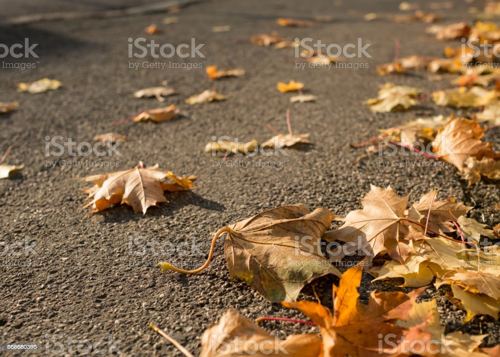 Closeup maple trees als foliage on a street stock photo