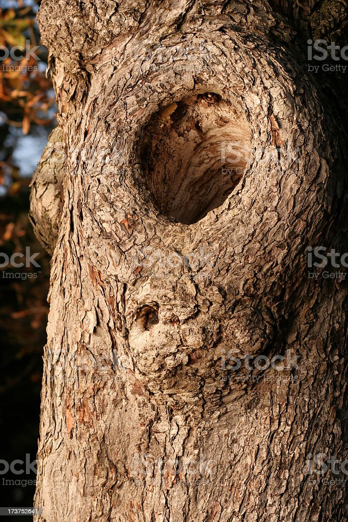 A close-up of a animals home inside of a tree royalty-free stock photo
