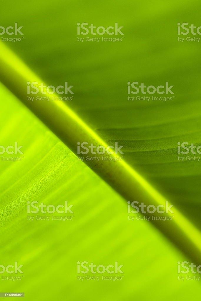 Closeup of a banana tree leaf stock photo