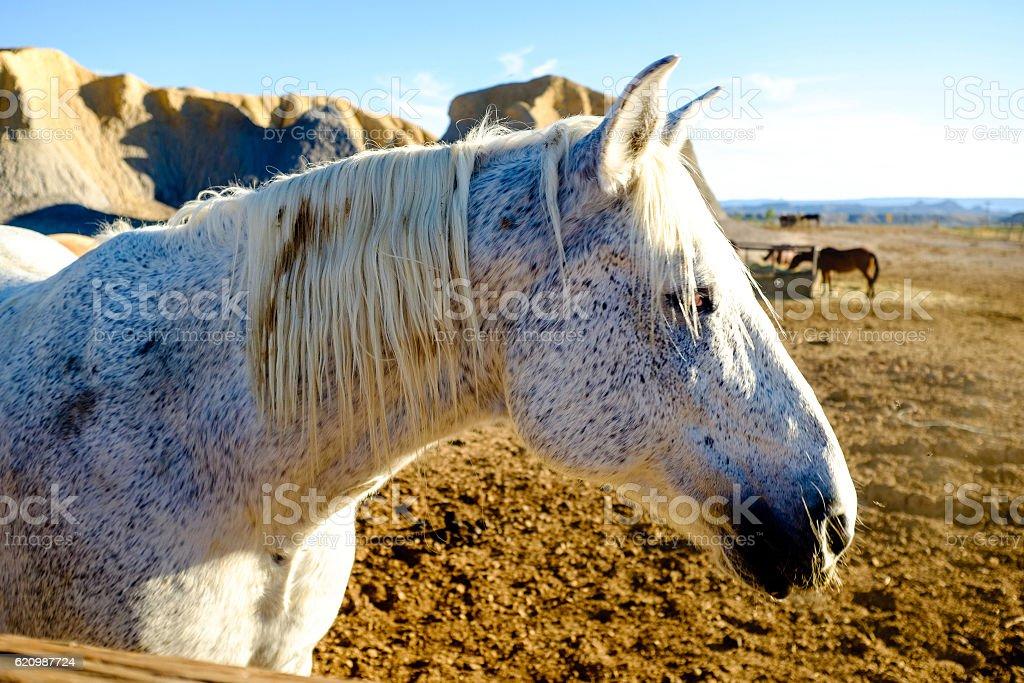 closeup of a beautiful grey horse stock photo