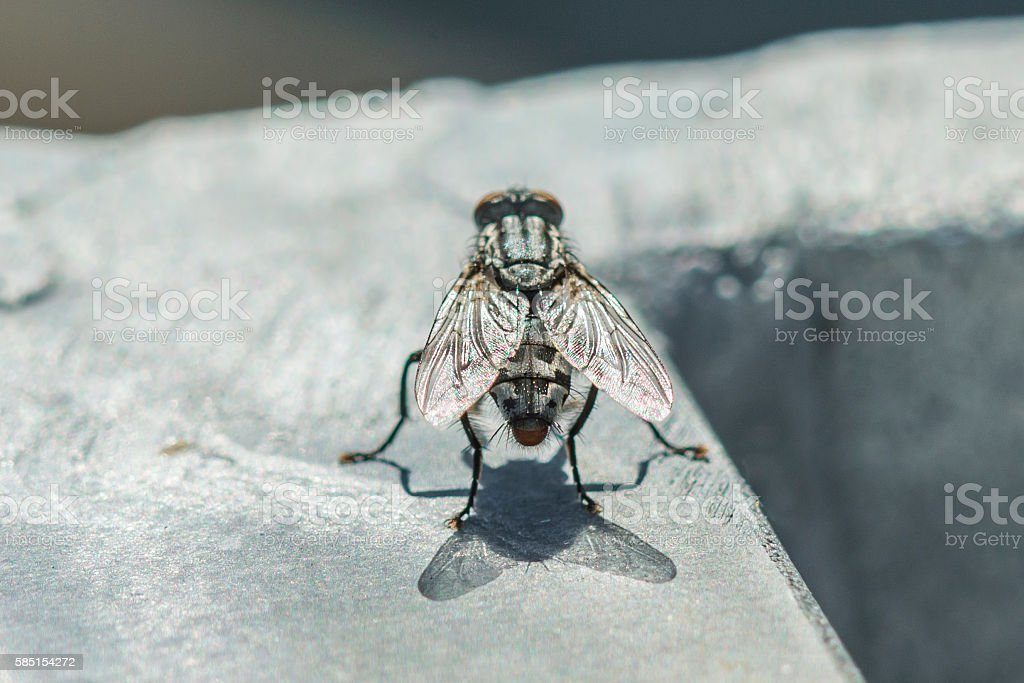 Closeup of a big fly at a sunny day outdoor stock photo