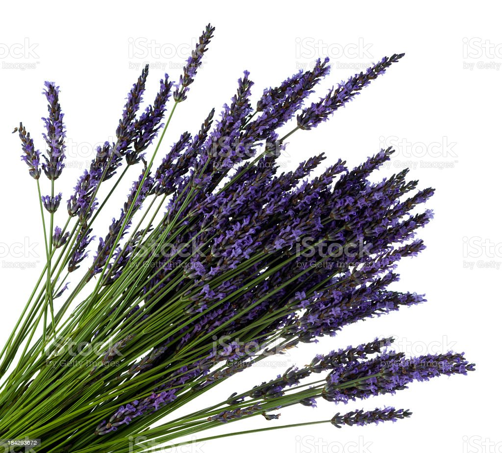 Close-up of a bouquet of lavender over a white backdrop royalty-free stock photo