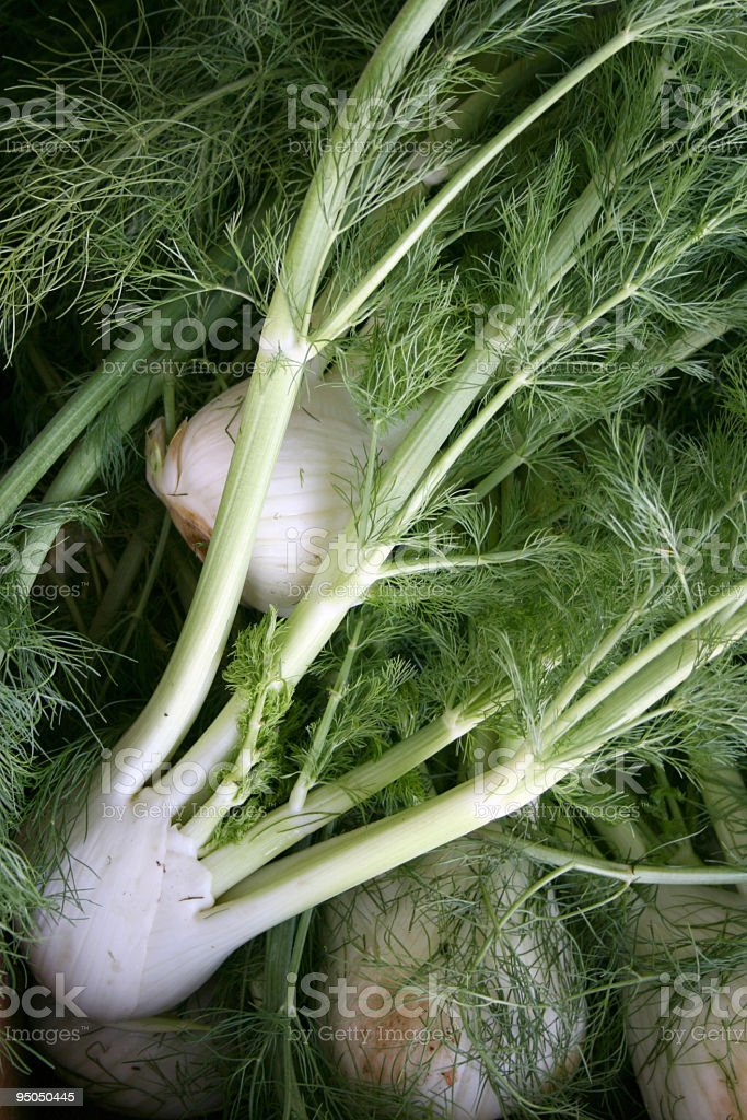 Close-up of a bunch of fennel roots and leaves stock photo