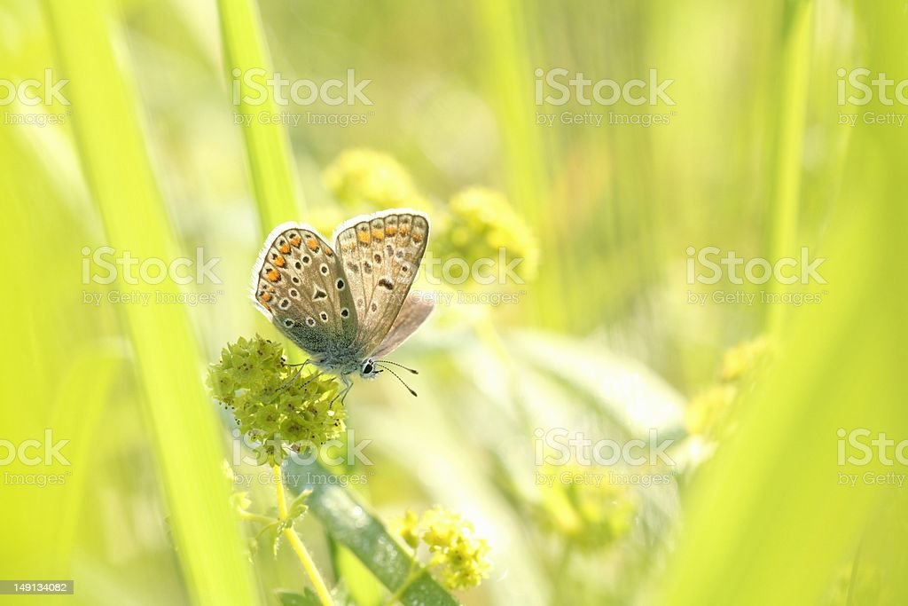 Closeup of a butterfly royalty-free stock photo
