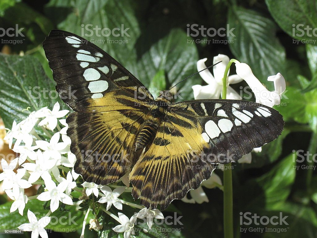 Closeup of a Butterfly #3 stock photo