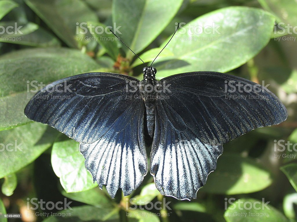 Closeup of a Butterfly #2 stock photo
