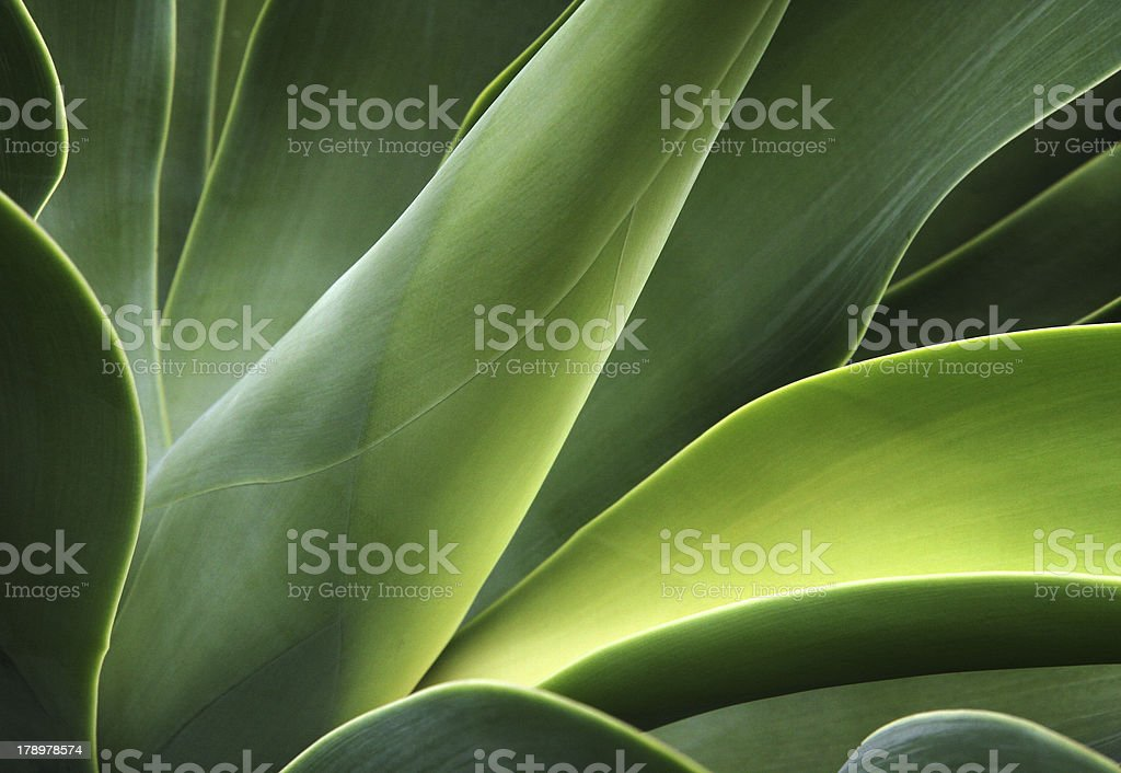 close-up of a cactus stock photo