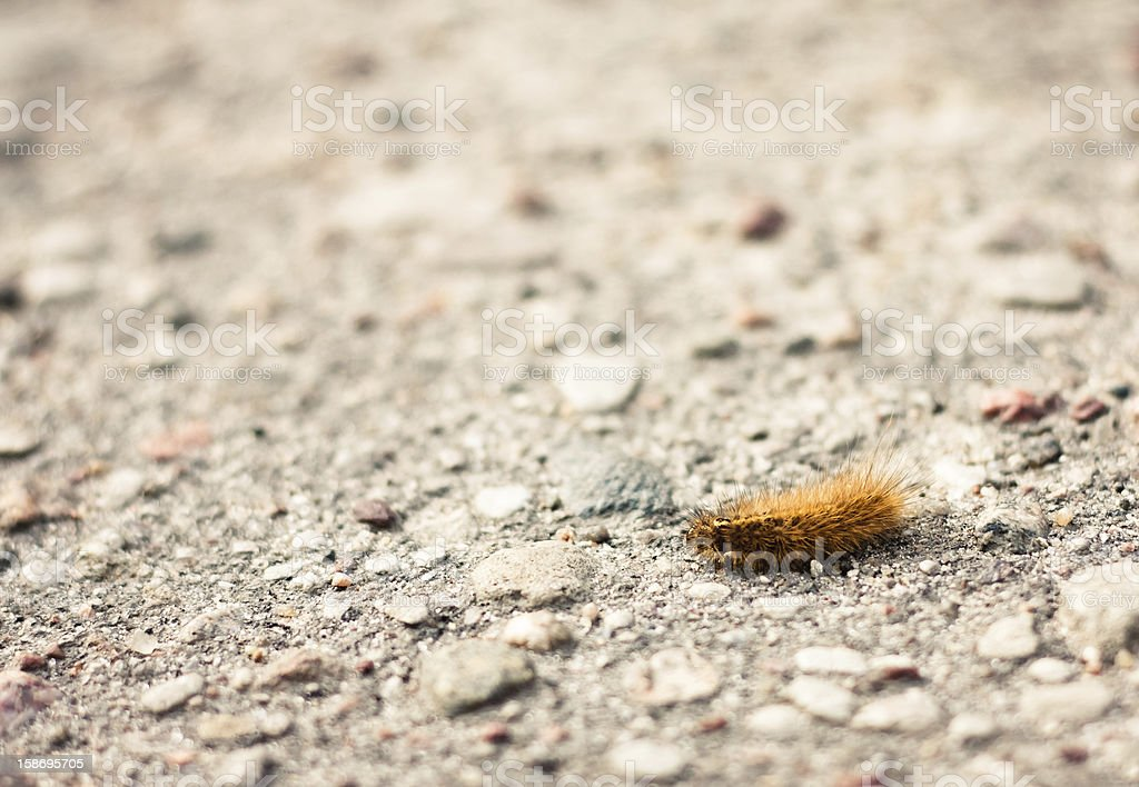 Closeup of a caterpillar on the ground royalty-free stock photo