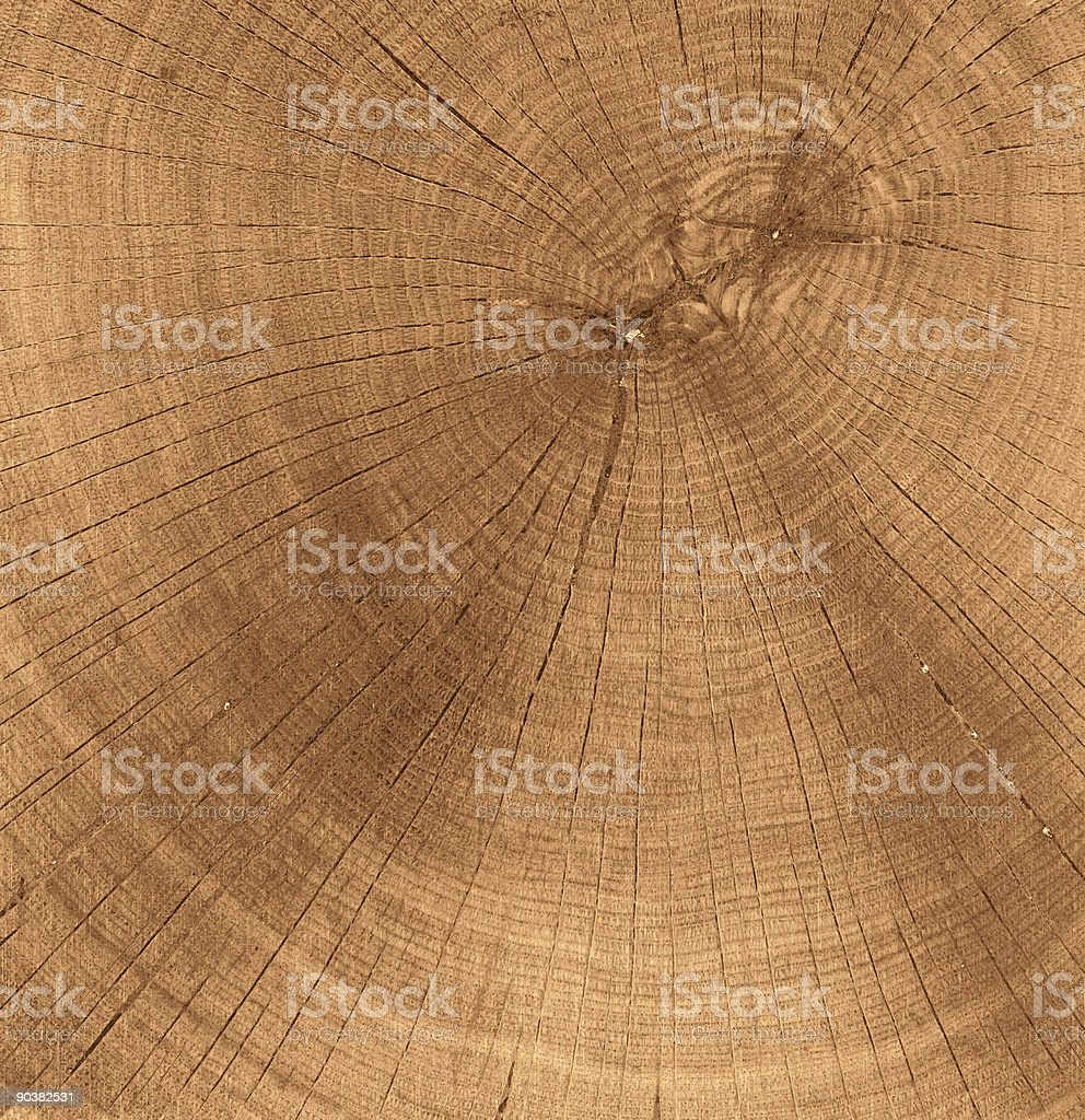 Close-up of a clear brown tree stump stock photo