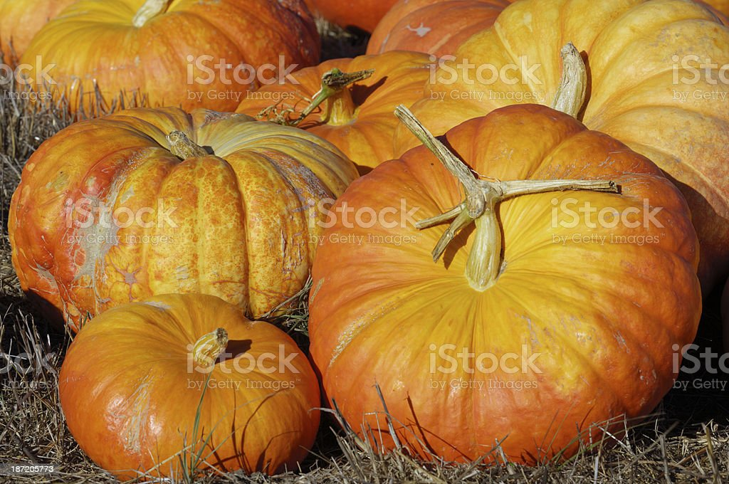 Close-up of a collection of orange pumpkins on grass royalty-free stock photo